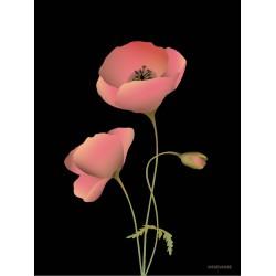 Poppy noir plakat VISSEVASSE