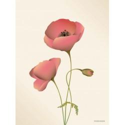 Poppy meringue plakat VISSEVASSE